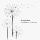 Fototapeta Dmuchawce - vector dandelion