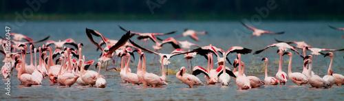 Foto op Aluminium Flamingo Flamingos at Lake Nakuru, Kenya
