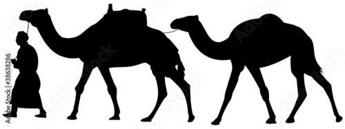 Karawane Kamele Silhouette