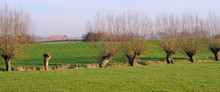 Polder Landscape With Pollard Willows, Flanders