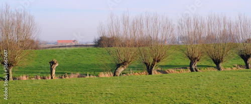 Slika na platnu polder landscape with pollard willows, flanders