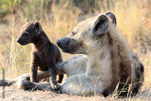 Papiers peints Hyène Mother and Baby Hyena
