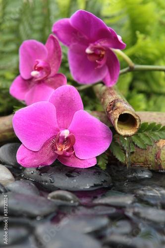 rozowa-orchidea-z-bambusem-w-tle