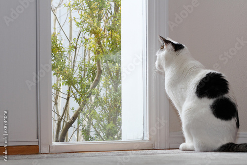 Fotografie, Tablou  Cat Looking Out a Window