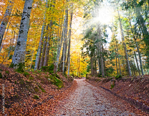 wlasciwa-droga-w-lesie