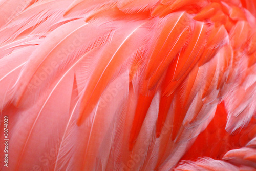 Tuinposter Flamingo Flamingo Feathers