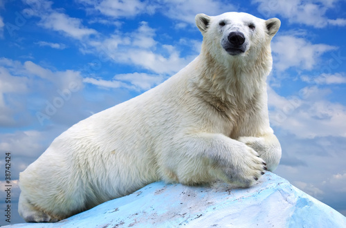 polar bear Canvas-taulu
