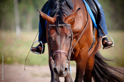 Horse tired after the training Fototapet