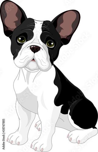 Poster Magie French bulldog