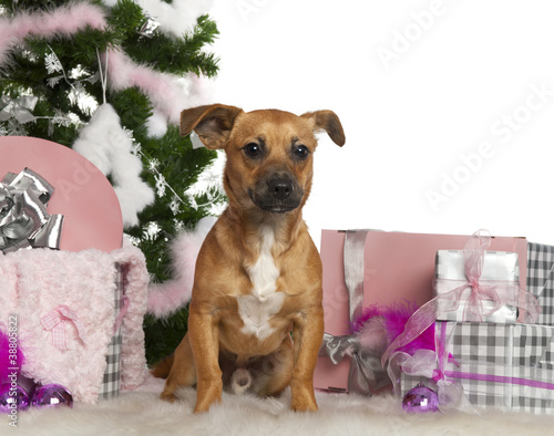 mixed breed dog 7 months old with christmas tree and gifts