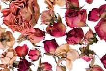 Dry Roses Background For Memor...