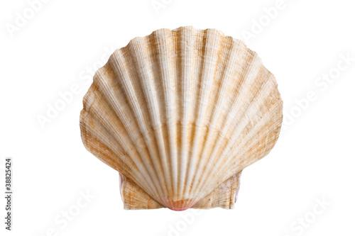 Obraz na płótnie scallops shell