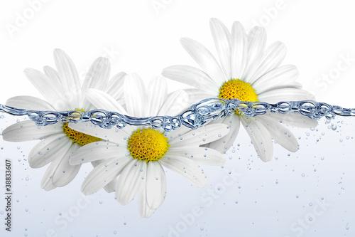 Doppelrollo mit Motiv - Wasser 65 (von K.-U. Häßler)