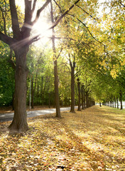Alley of trees in autumn in the city park