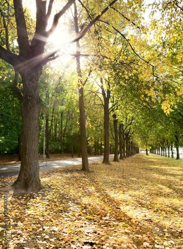 aleja-drzewa-w-jesieni-w-miasto-parku