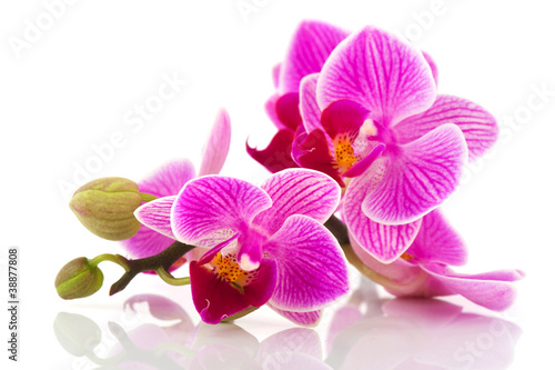 Foto op Canvas Orchidee Tropical pink orchid