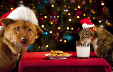 Cat And Dog Taking Over Santa'...
