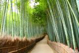Fototapeta Bamboo - Foret de bambou à Kyoto