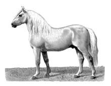 Workhorse - Cheval De Trait 2