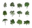 Leinwanddruck Bild - 12 bäume freigestellt