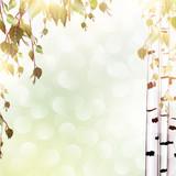 summer background with birch