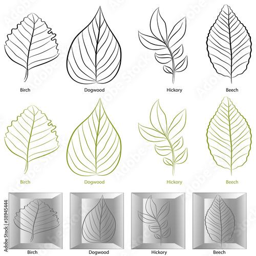 Obraz Tree Leaf Type Set - fototapety do salonu