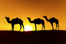Camel Train Silhouette On The ...