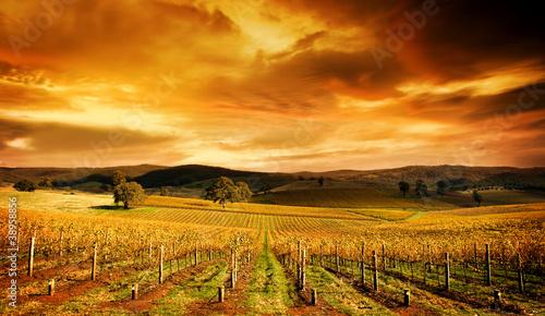 Valokuvatapetti Stunning Vineyard