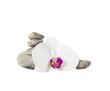 Orchidee mit Steinen.