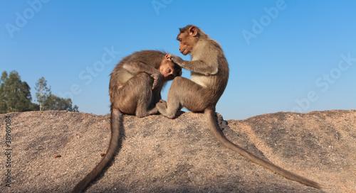 Fotografía  two monkeys