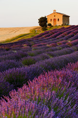 Fototapetachapel with lavender and grain fields, Plateau de Valensole, Pro