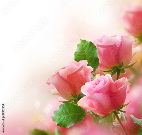 Deurstickers Roses Rose