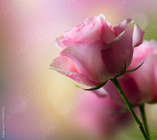 Naklejki o różnych zastosowaniach romantyczne-kwiaty-rozy