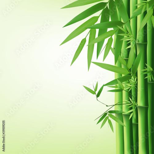 ilustracja-wektorowa-bambusa