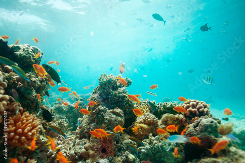 Canvas Prints Coral reefs lagoon
