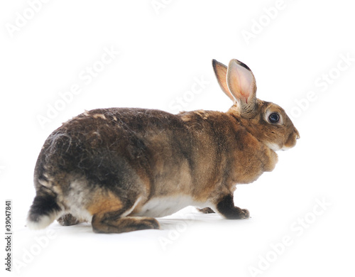 Poster Tortue Adorable rabbit isolated on a white background
