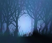 Spooky Dark Forest.