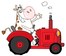 Happy Cow Farmer In Red Tractor Waving A Greeting