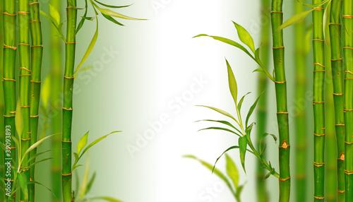 bambusowe-spa-tlo