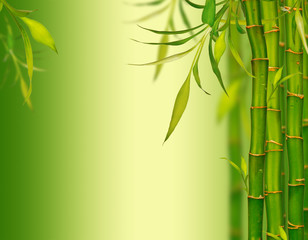 FototapetaYoung bamboo sprouds background