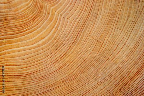 Fotografie, Obraz  Cutted tree trunk wood texture