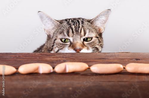 Katze und Würstchen Fototapete