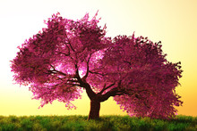 Mysterious Cherry Blossom Trees