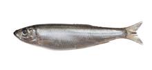 Salted Sprat Fish Isolated On ...