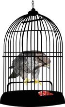 Eagle In Cage Illustration