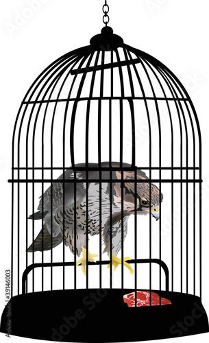 In de dag Vogels in kooien eagle in cage illustration