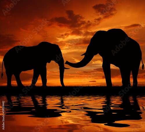 Photo Stands Cappuccino silhouette elephant in the sunset