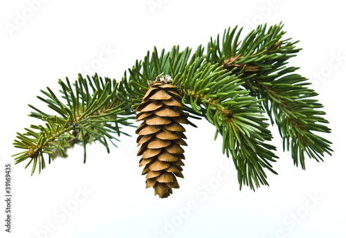 Fototapeta The branch of spruce and cone on white background obraz