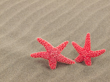 Two Red Starfish On The Beach ...
