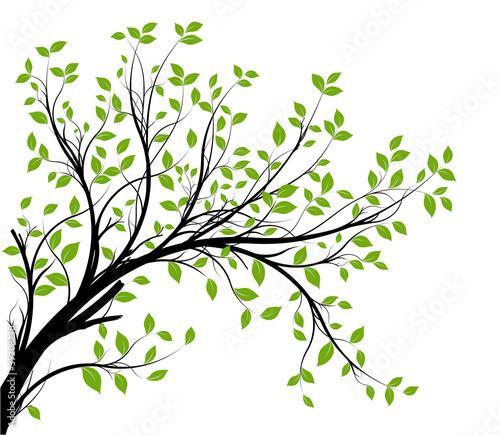 Obraz vector set - green decorative branch and leaves - fototapety do salonu